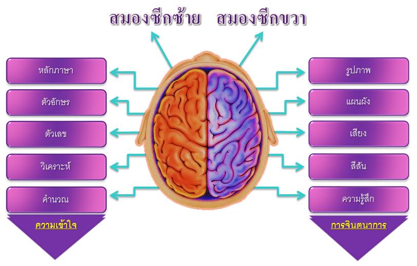 สมองและลายนิ้วมือ